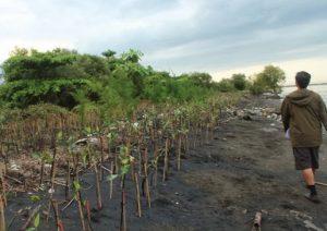 Sampah mendominasi hasil penanaman bibit mangrove yang dilakukan di kawasan Wonorejo, Kendal. Butuh penanganan, segera!