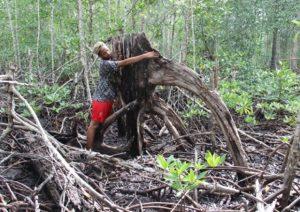 Hutan mangrove Banggai terancam karena pengalihfungsiannya untuk dermaga pelabuhan nikel.