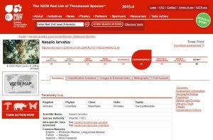 Status Bekantan terancam punah di website IUCN.
