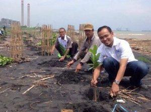 Satu mangrove, satu bronjong. (Foto: IKAMaT).