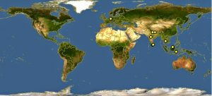 Peta persebaran Kucing Mangrove di seluruh dunia.