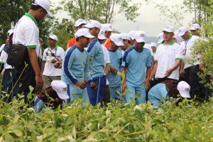 Siswa/i berbondong-bondong mengambil bibit mangrove untuk ditanam.