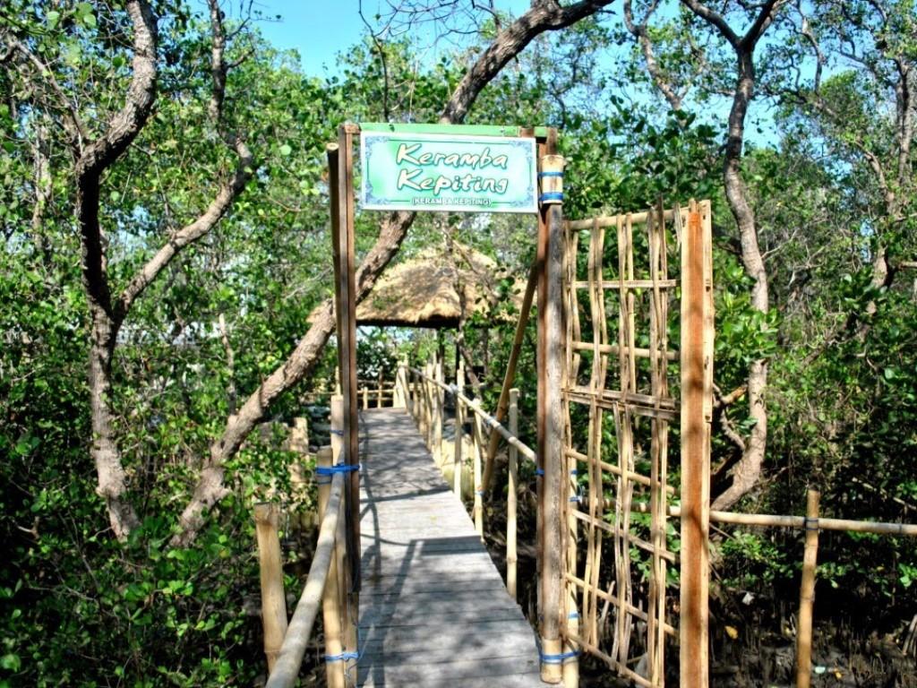 Ekowisata Mangrove Ala Kelompok Nelayan Bali Mangrovemagz Com