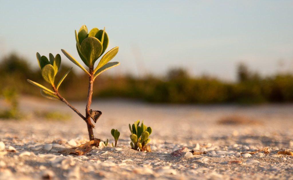 Lima Foto Mangrove Keren Untuk Wallpaper Laptop Anda Mangrovemagz Com
