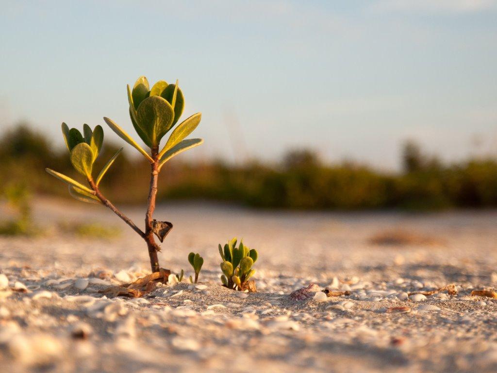 Lima Foto Mangrove Keren Untuk Wallpaper Laptop Anda