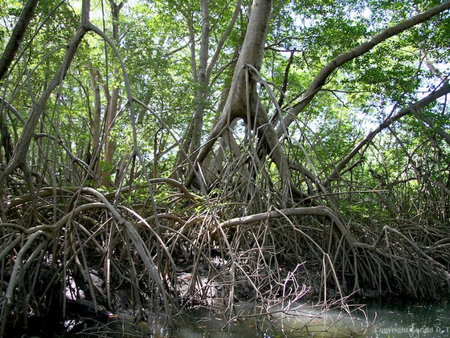 Hasil gambar untuk akar mangrove